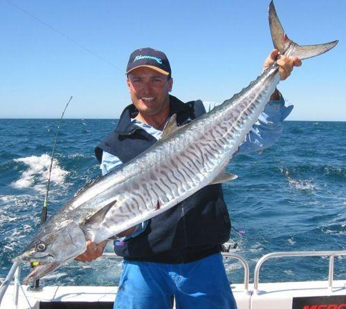 Scomberomorus Cavalla Kingfish Mackerel King Kingfish Fish Mackerel Fish King Mackerel