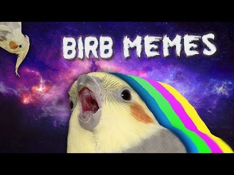 10 Min Of Dank Birb Memes Youtube Memes Funny Memes Theme Song