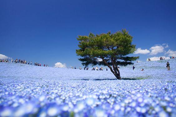 Hitachi Seaside Park, Hitachinaka, Japan