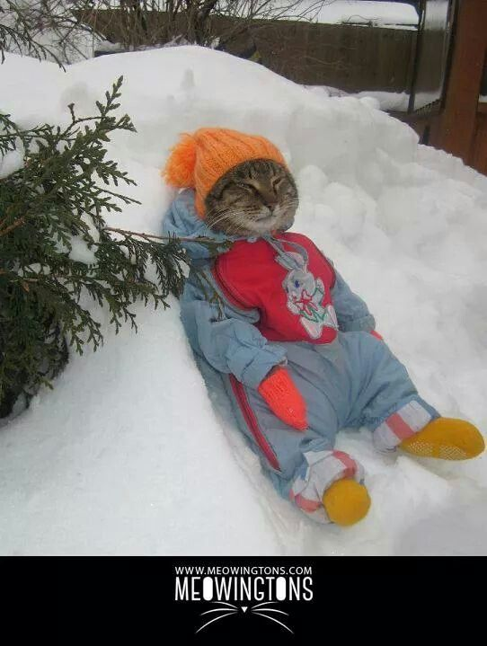Cat in a snow suit.