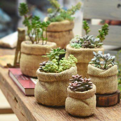 Burlap Bag Style Fleshiness Plants Flowerpot