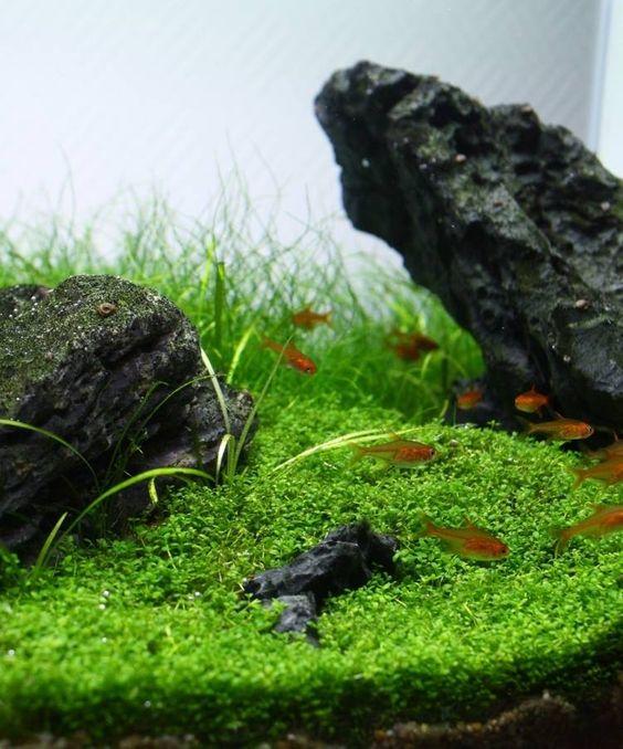 Fische Steine Aquarium Deko Ideen (Einrichtungs)Beispiele - deko fur aquarium selber machen