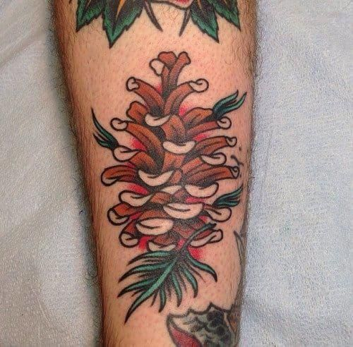 Image Result For Pinecone Tattoo Traditional Tattoo Tree Pine Tattoo Tree Tattoo