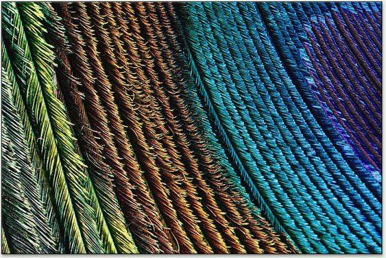 peacock feather colors.  People miss the browns
