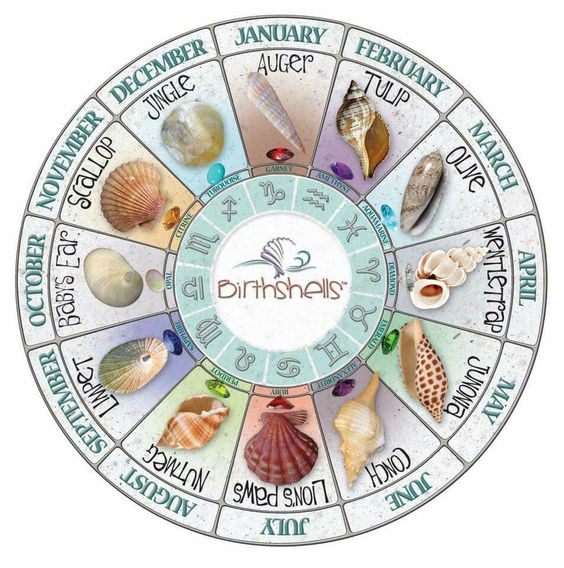 What's your birth shell?