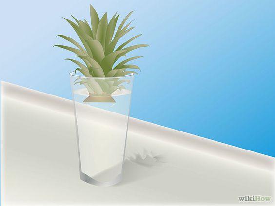 Comment faire pousser un ananas