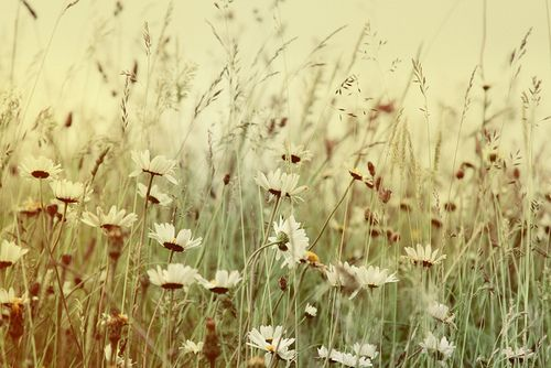 Photography Summer Field | Photography for Tumblr ...