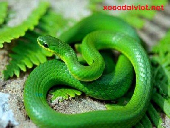 nằm mơ thấy rắn xanh