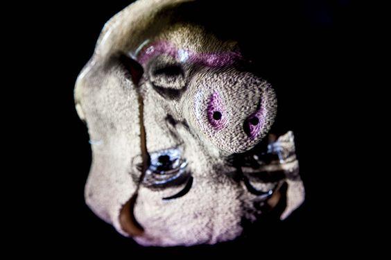 """Animal Farm. Aus der Serie """"Aufstand der Tiere"""" 2014 Rotierende Skulpturen aus Tier Masken, Schwarz Licht und Projection Mapping aus der Serie """"Pathfinder"""" Skulptur, Objekt, Video, Installation,..."""