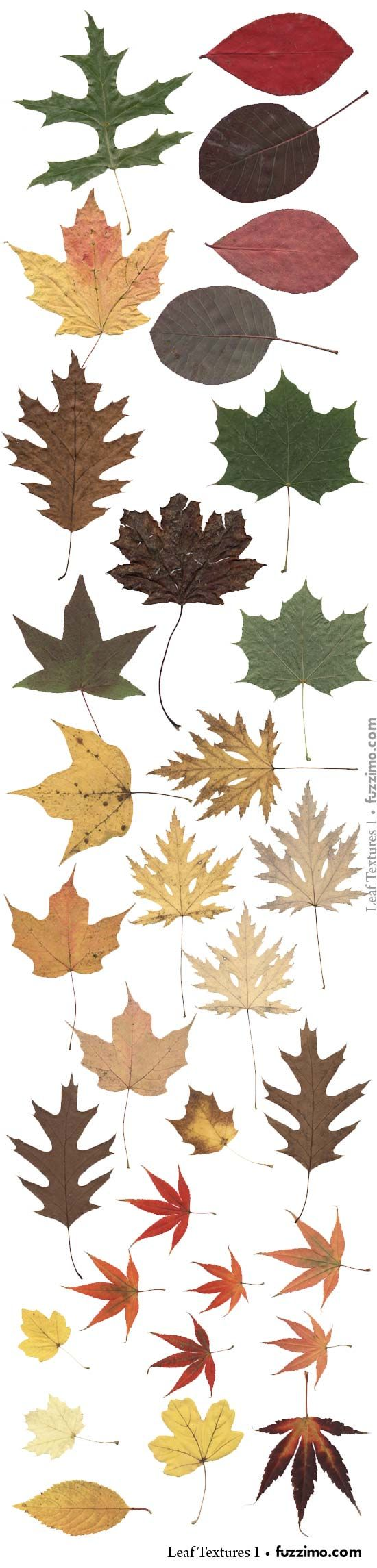 Free leaf vector images from Fuzzimo.comfzm-Leaf-Textures-02.jpg 550×2,290 pixels