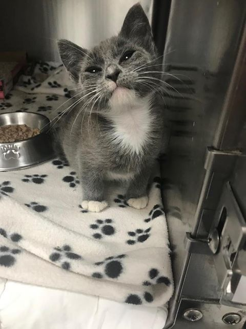 Woman Saves Shelter Kitten Who Can T Walk And Gets Him Help To Fix His Leg Love Meow Shelter Kittens Kittens Cat Rescue