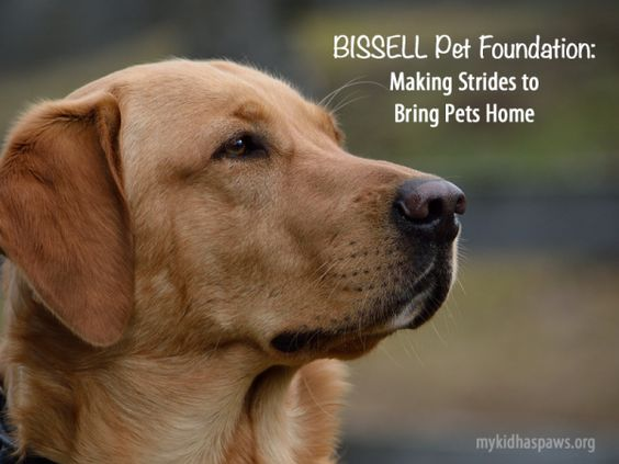 BISSELL Pet Foundation: Making Strides to Bring Pets Home
