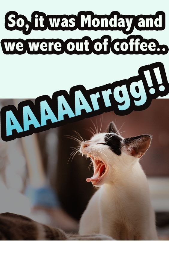 The Moment When You Ran Out Of Coffee Funny Cat Memes Funniest Cat Memes Coffee Humor