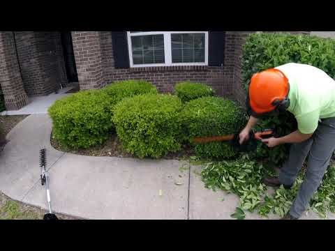20 Melt Away Your Stress Watch Me Trim Unruly Hedges Relaxing Lawn Care Youtube Lawn Care Hedges Lawn