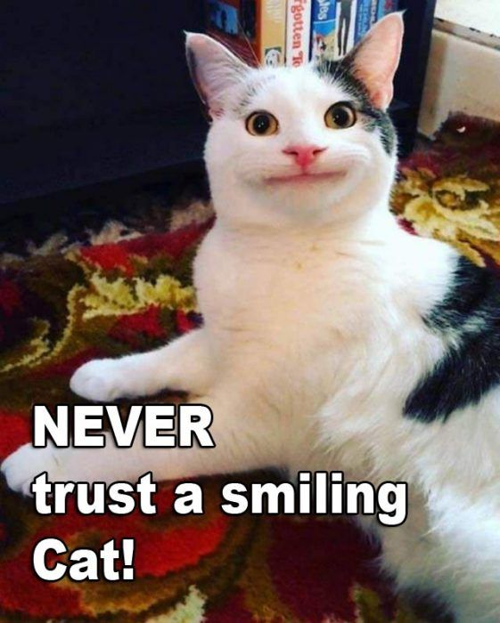Never Trust A Smiling Cat With Images Cute Cats Funny