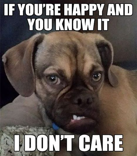 Grumpy Earl the Puggle posts memes on his Facebook page.