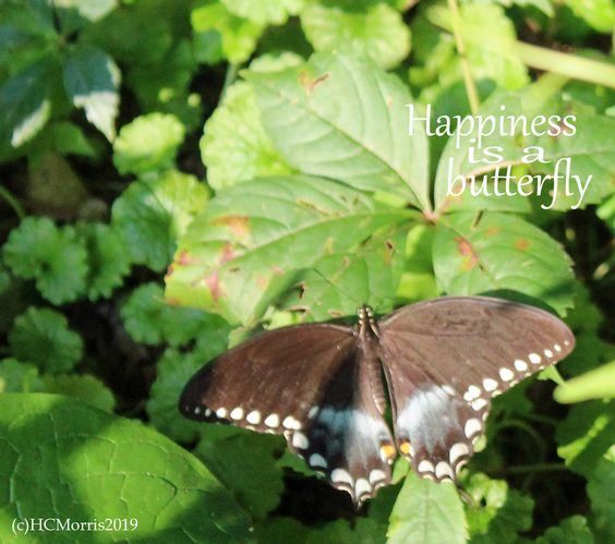 a butterfly with the words happiness is a butterfly