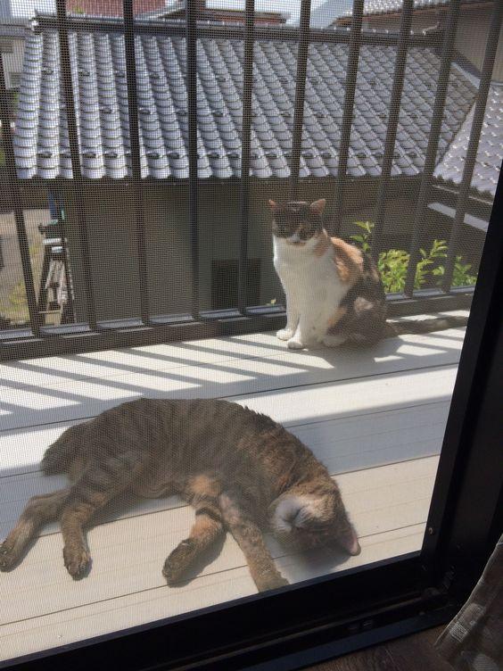 Jack & Sakura
