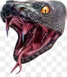 Anaconda Png Anaconda Transparent Clipart Free Download Vipers Snake Baseball Clip Art Anaconda Snake Art Snake Painting Cobra Tattoo