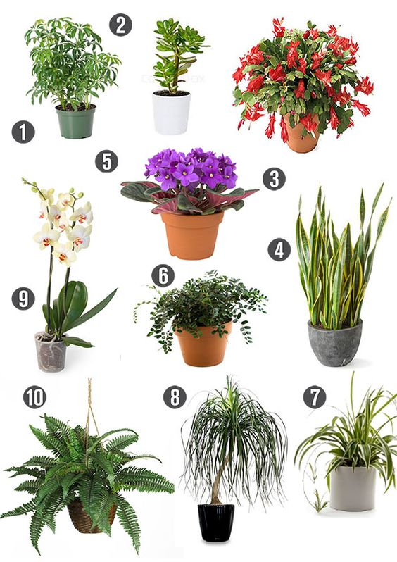 Home green plants and the o 39 jays on pinterest 7 uncommon indoor plants