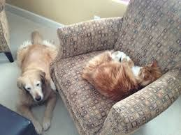 Image result for cats and children