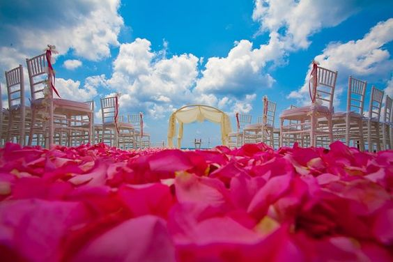 Amazae Special Events   www.amazaespecialevents.com