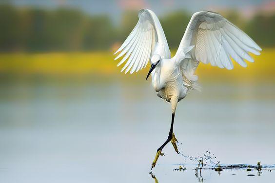 Ballet von pumabg