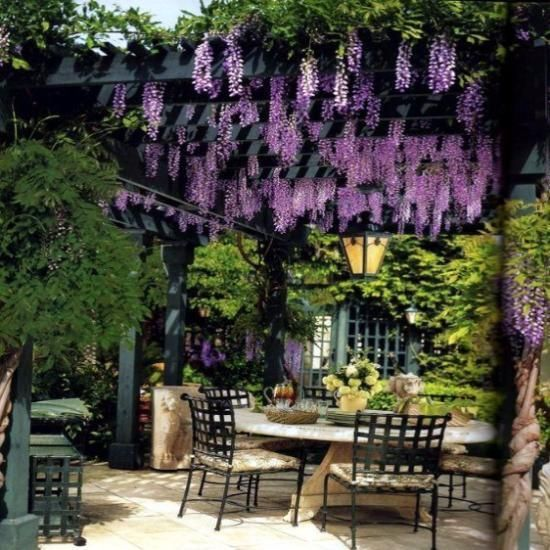 15 Strands Hanging Silk Wisteria Flowers Exteriordesign Backyard Design Backyard Backyard Pergola
