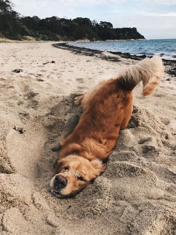 15 Happiest Dogs You Will Ever See In Your Life In 2020 Puppies Dogs Cute Animals