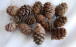 pinecones. cheap. wish I had found this site 6 weeks ago...