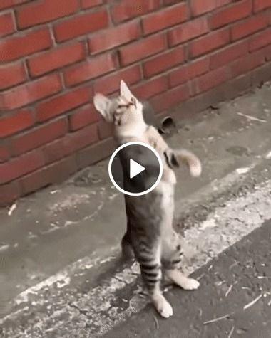 Ual que salto do gato bonito espetacular
