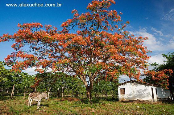 Fazenda em Guaiuba, Ceara - BRASIL