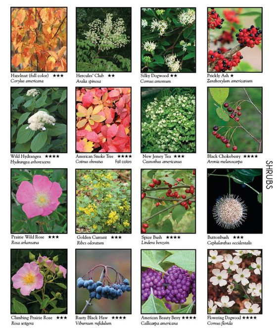 This has the names of numerous wild flowers shrubs and for Landscaping plants pictures and names