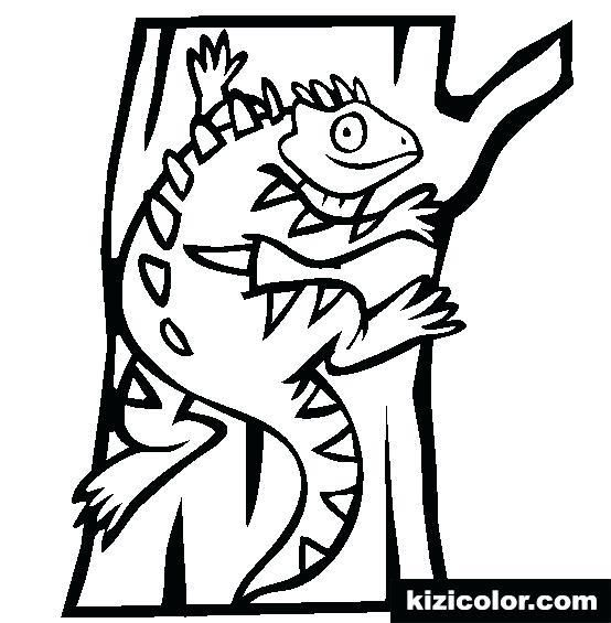 Iguana Coloring Pages Print This Coloring Page Iguana Coloring