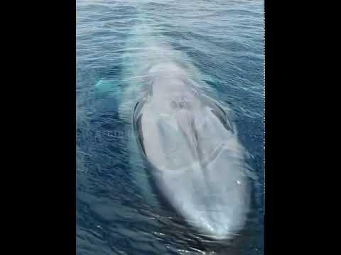 شاهدوا كيف يتنفس الحوت الأزرق العملاق عن قرب Animals Whale Outdoor