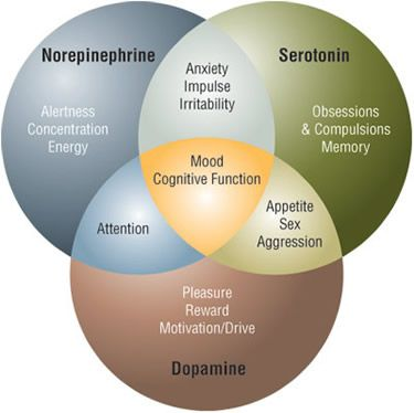neurotransmitters - serotonin, dopamine, norepinephrine:
