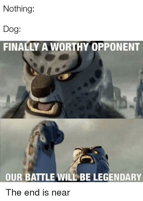 The Best Of Our Battle Will Be Legendary Memes Funny Dog Memes Super Funny Pictures New Funny Pics