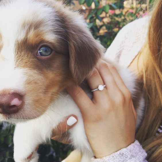 Proposal Ideas Using Pets: OMG This Girl Got A PUPPY For Her Proposal