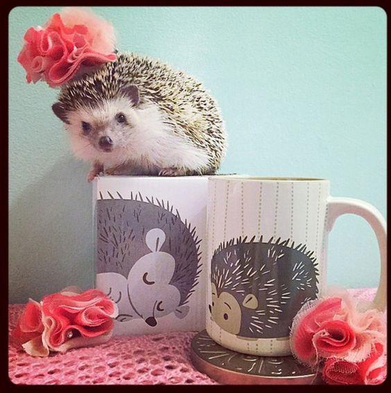 porcupine cup. #adoredecor #decor #animal: