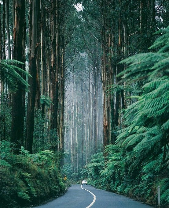 Redwoods. Can I just be there already?
