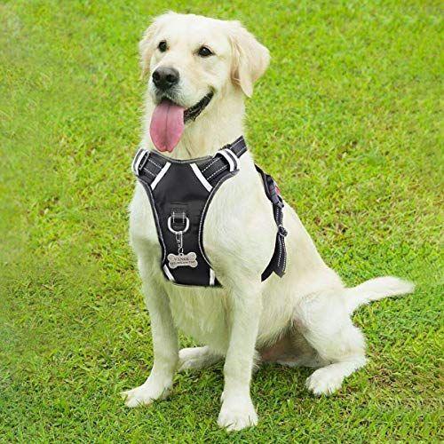 Pin On Sitting Dog