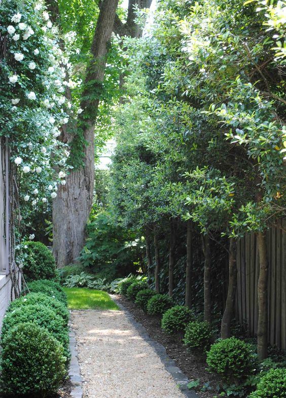 Narrow Backyard Trees : path white roses climbing yards what type roses my house side garden