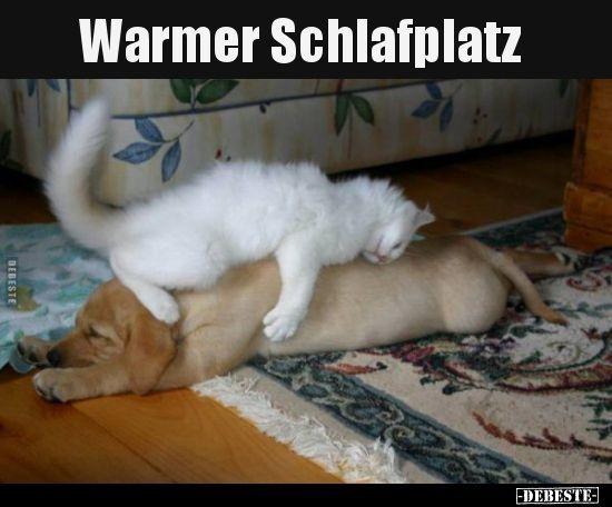Warmer Schlafplatz Lustige Bilder Spruche Witze Echt