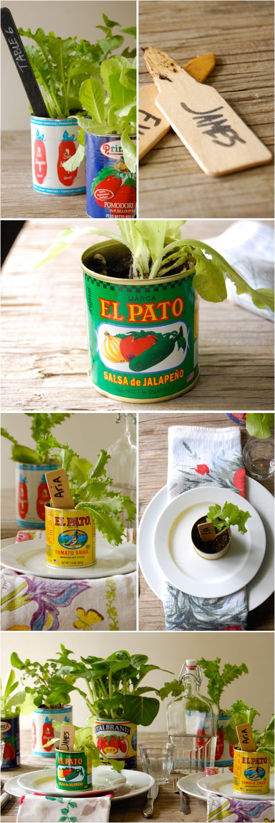 Favor - Lettuce in a tin. I could create a design around the tin. Hmmmm
