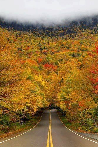 Autumn Tree Tunnel.... Smuggler's Notch State Park, Vermont