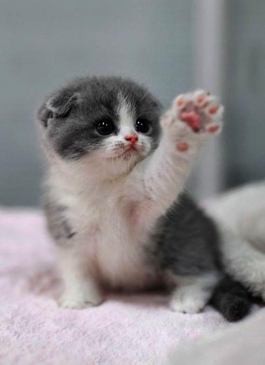 Santa S Little Helper Cute Baby Cats Cutest Kittens Ever Kittens Cutest