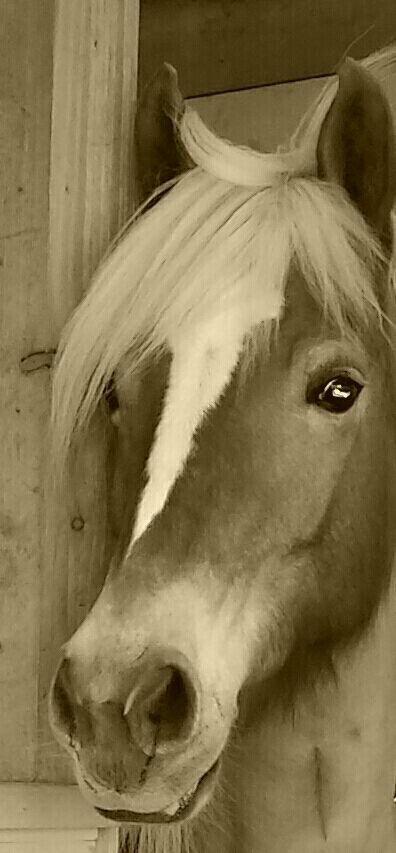 Pferdi ..my love