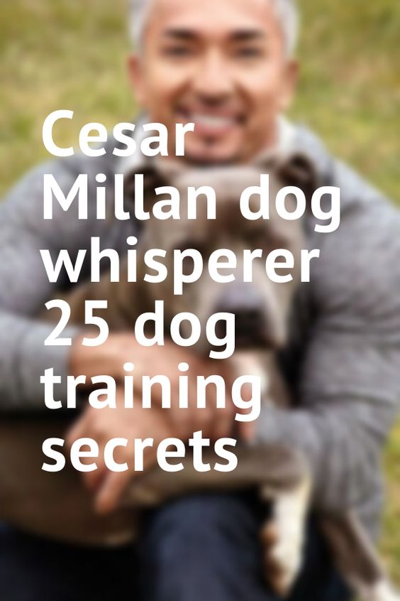 Cesar Millan dog whisperer 25 dog training secrets  cesar millan puppy training | cesar millan training | cesar millan quotes | cesar millan tips | cesar millan en español | cesar millan puppy | cesar millan frases | cesar millan training puppies | Cesar Millan | Cesar Millan | Pet Innovations- Maker of Cesar Millan's dissolving dog treats!