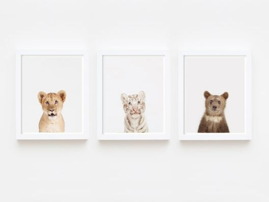 Set of 3 Prints from Animal Print Shop