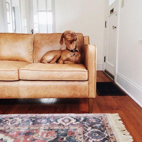 Mua sofa da ở đâu và những điều cần tránh khi sắp xếp sofa